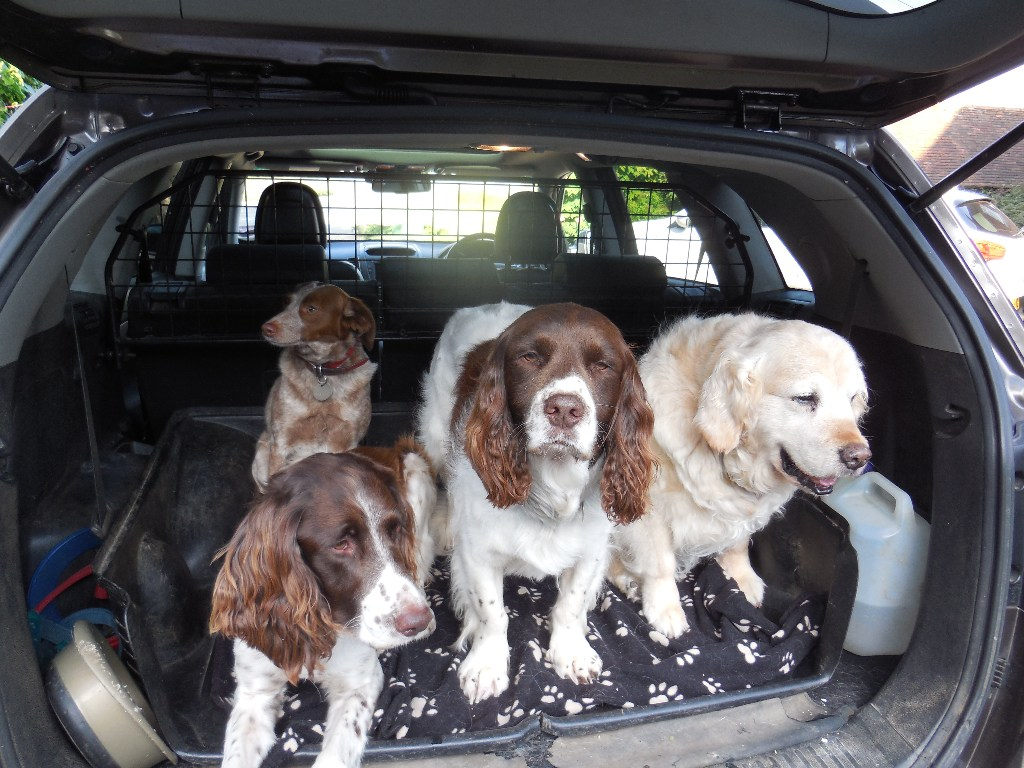 holiday-plus-4-dogs-june-2015-084