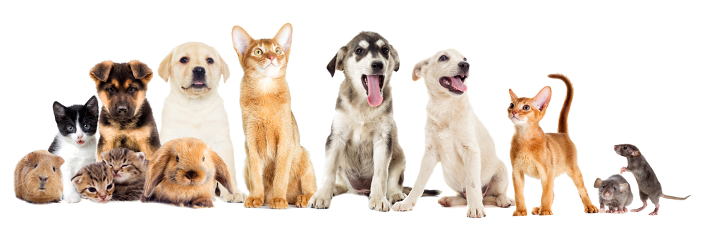 Home and Pet Sitters 4U - How to book