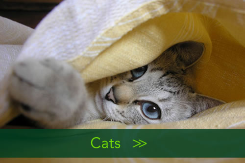Homeandpetsitters4u- Cats