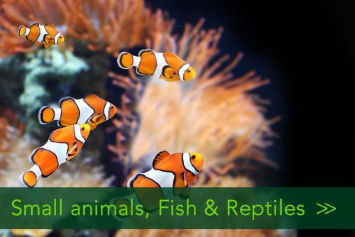 Homeandpetsitters4u - Small animals Fish & Reptiles/